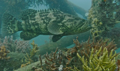 Artificial reefs Gulf of Morrosquillo