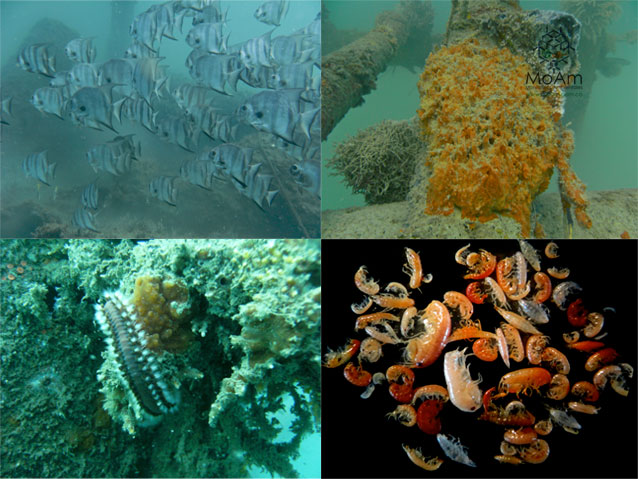 Biodiversity artificial reefs Gulf of Morrosquillo 10th CARAH