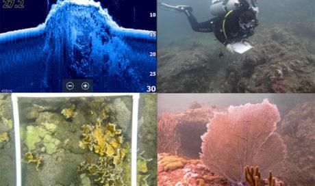 Corals Seagrass Magdalena