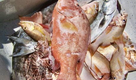Responsible Fishing Santa Marta